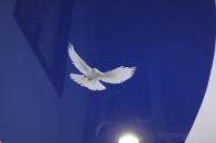 Наклейки на натяжной потолок